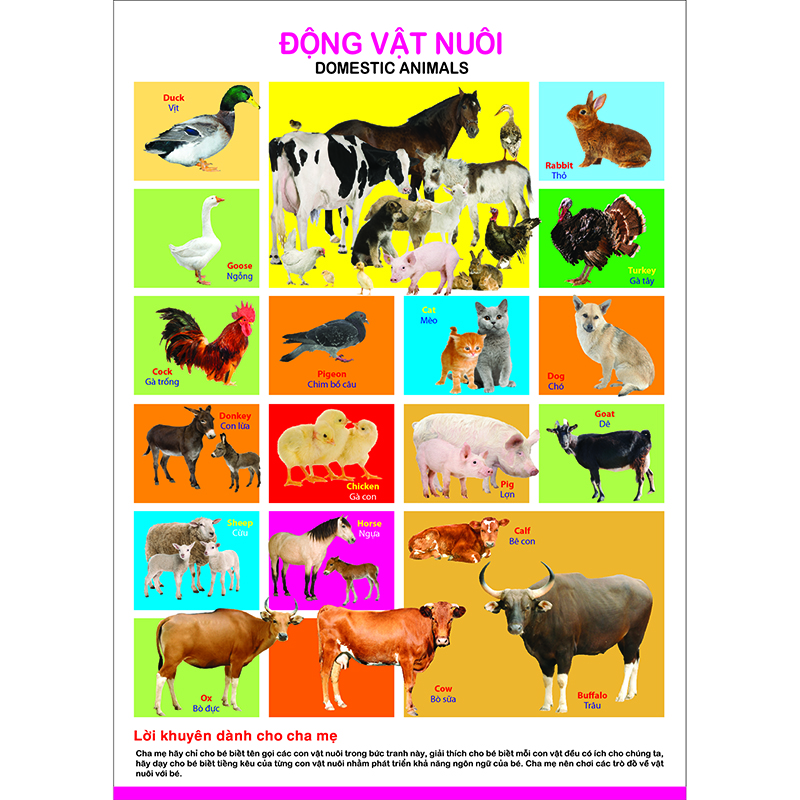 To poster - Dong vat nuoi