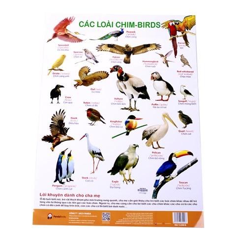 Poster treo tuong chu de cac loai chim